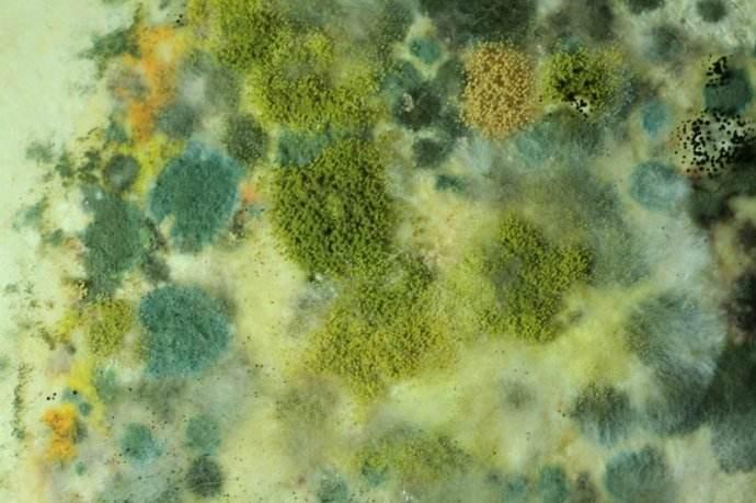 UV涂料霉菌